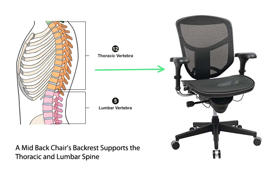 Mid Back Office Chair Spinal support