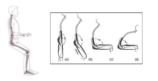 saddle stool lumbar curve